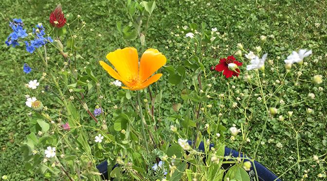 Résultat des semences de fleur sauvage